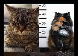 Enlace a Un montón de gatos que tienen cara de odiarte y lo sabes