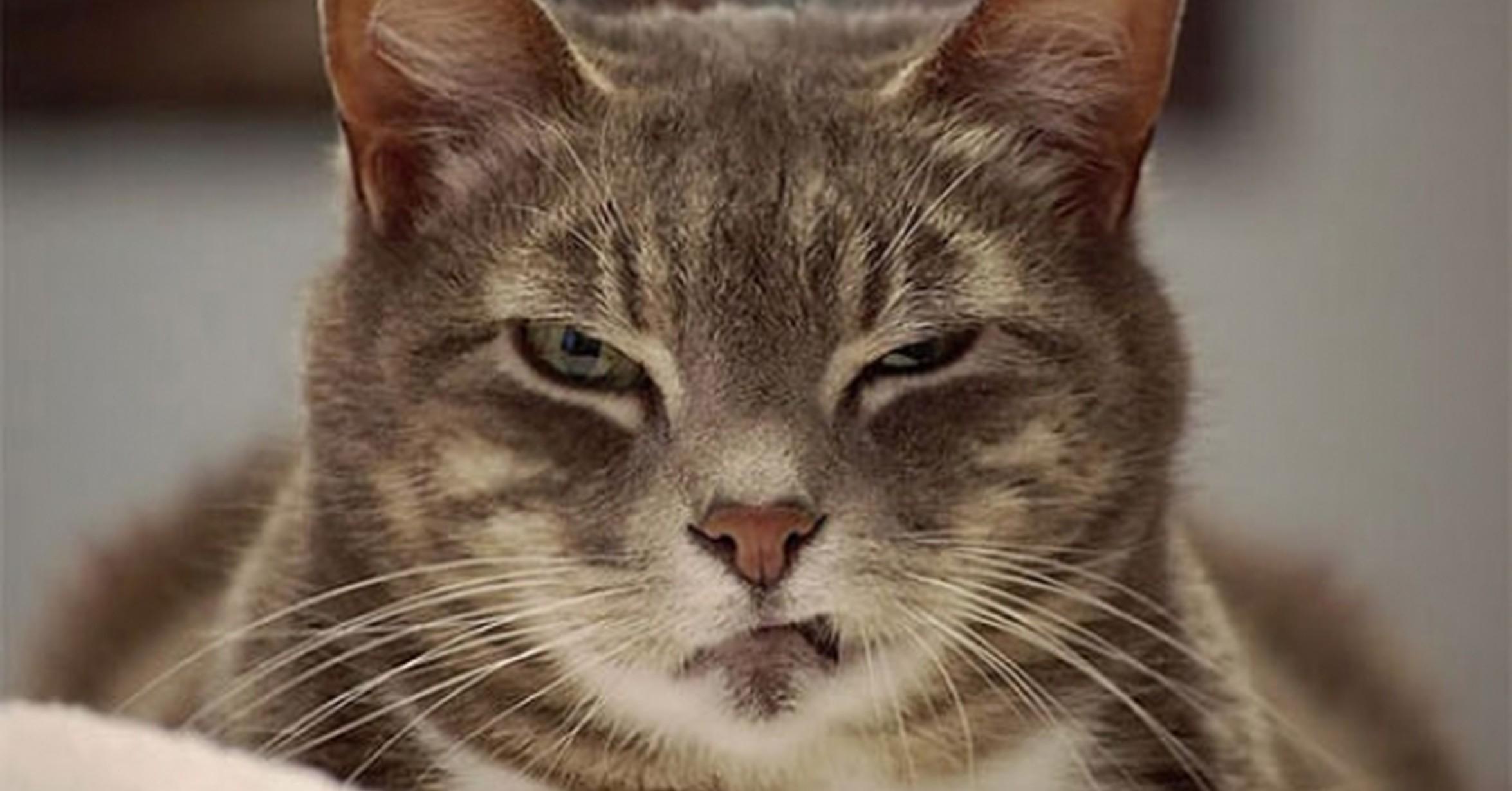Un montón de gatos que tienen cara de odiarte y lo sabes