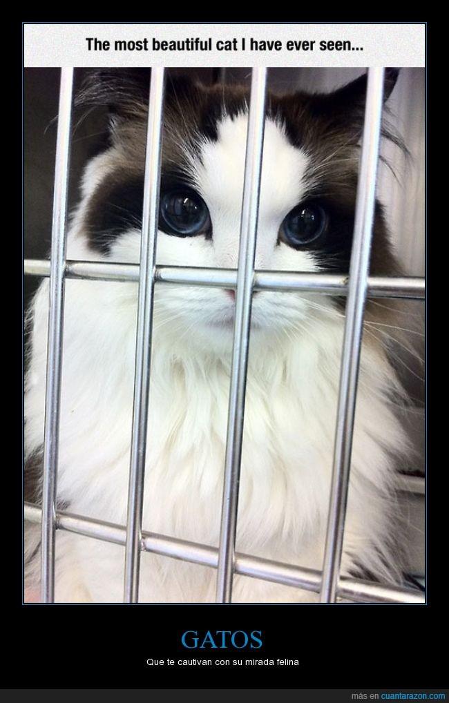 brutal,felino,gatos,ojazos,ojos