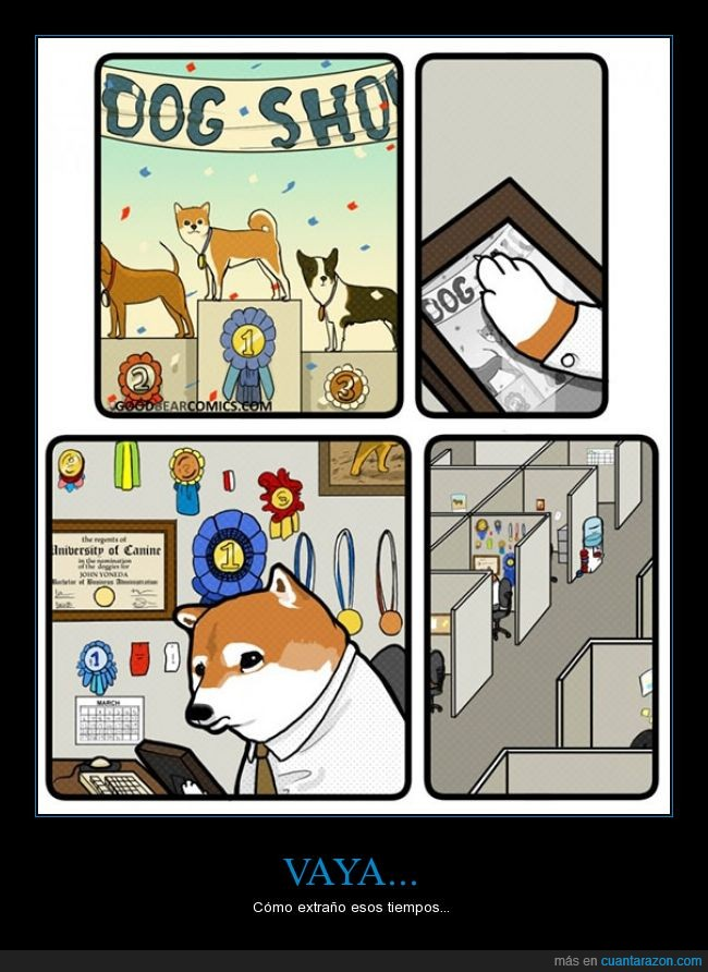 cubo,empleo,ganar,oficina,perro,show,talento