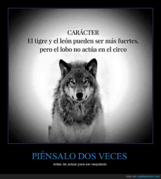 animal,animales,domesticar,León,lobo,salvajes,tigre