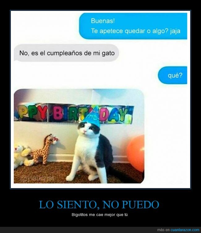 cumpleaños,fiesta,gato,poder,quedar