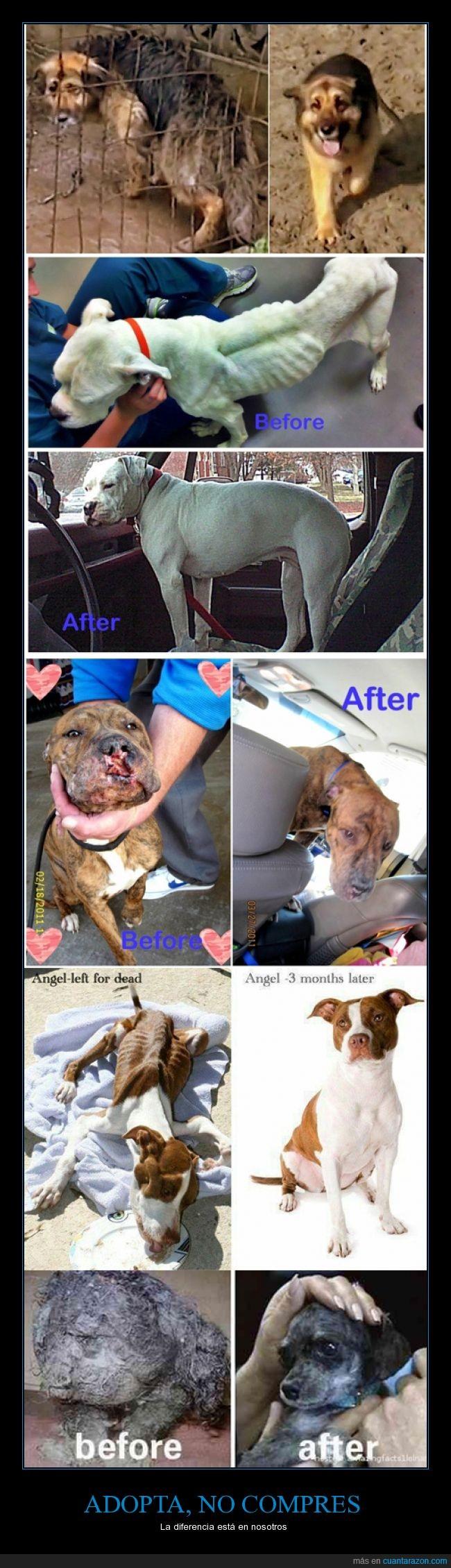 abandono,antes y despues,Comprar,perros,rescatados