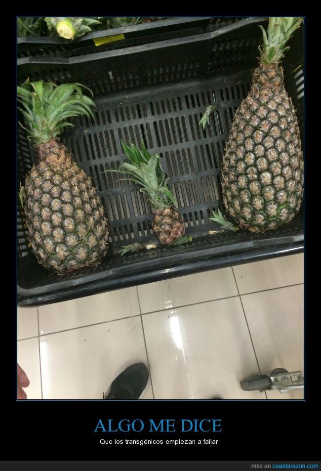 fruta,pequeña,piña,tamaño,transgénico
