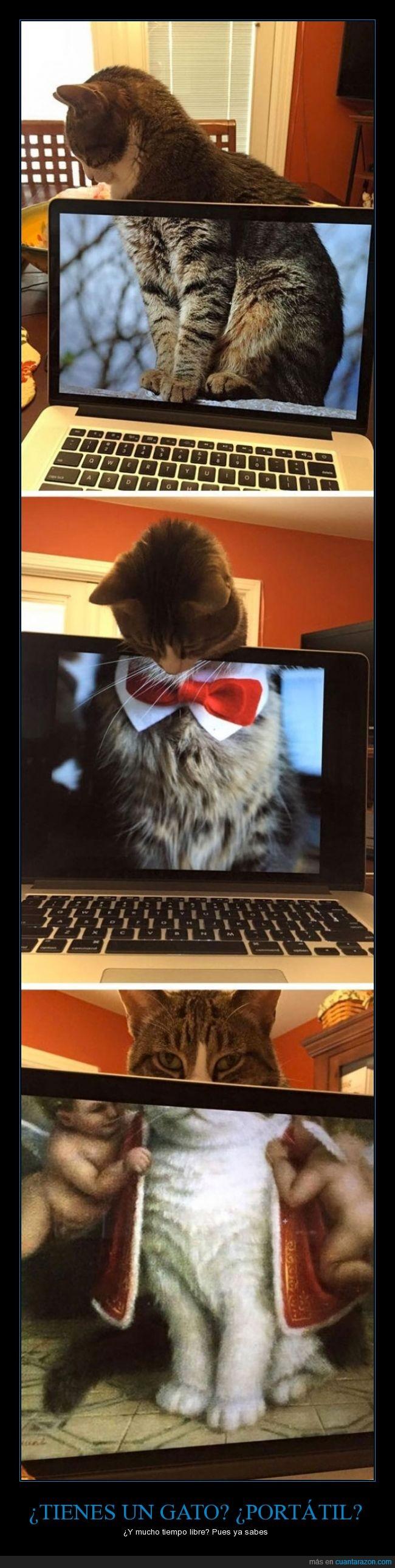 colocar,encajar,gato,internet,libre,ordenador,pantalla,portatil,tiempo