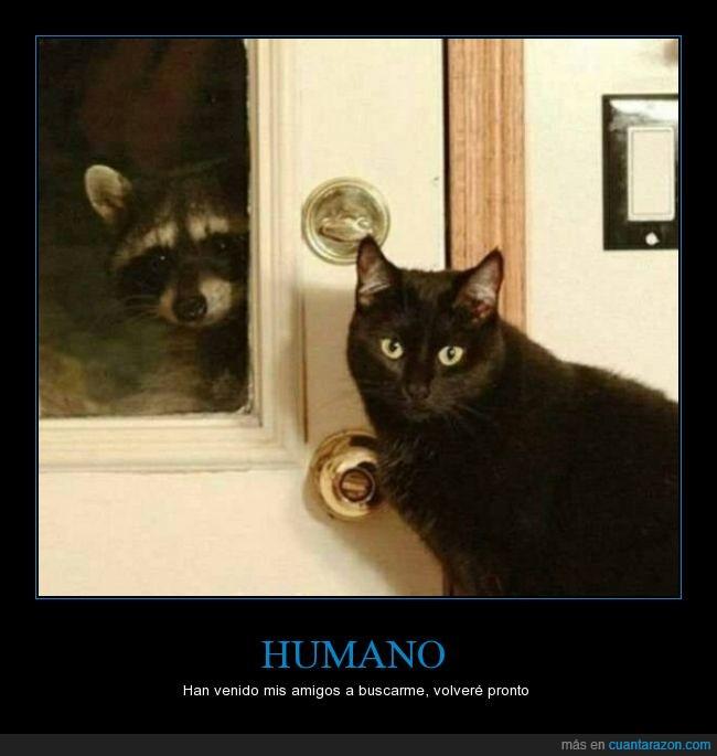 buscar,gato,mapache,pandilla,wtf