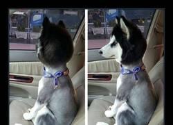 Enlace a Lo que le han hecho a este perro debería ser punible :(