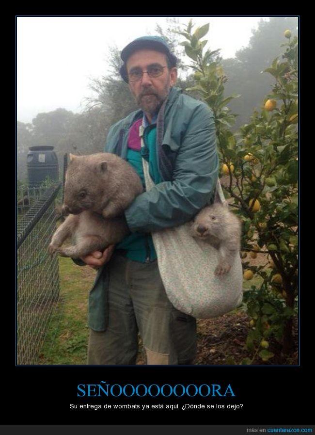 aliexpress,animal,compra,entrega,granjero,llegar,paquete,señora,wombat