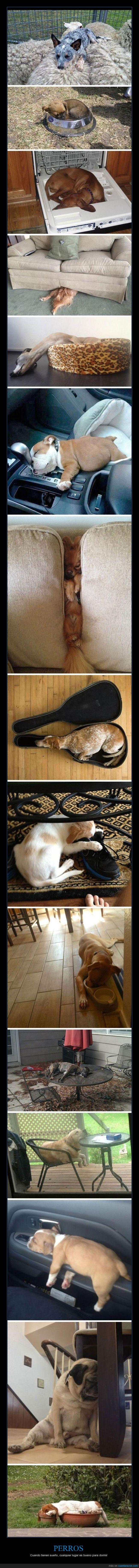 dormir,extraño,perro,posición,sueño
