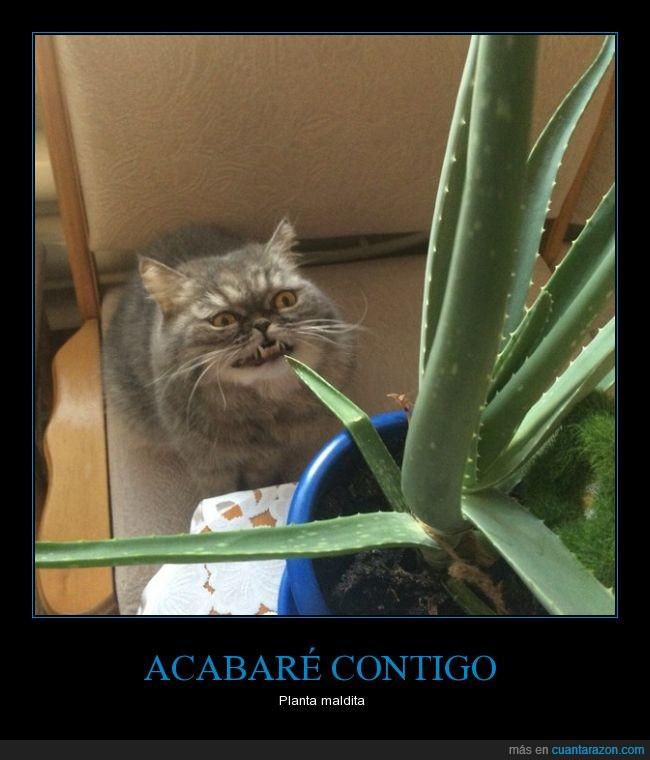 aloe,cactus,gato,odiar,odio,planta