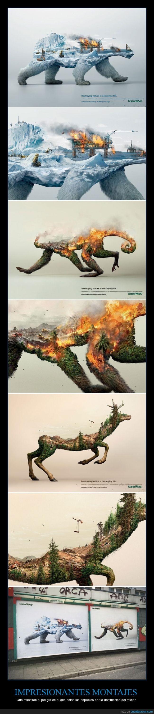 especies,fotos,impresionantes,mundo,peligro,planeta,Robin Wood