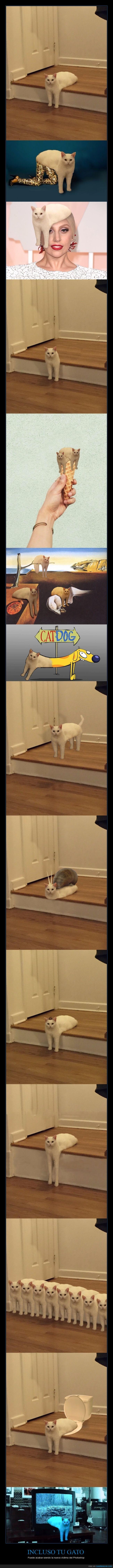 blanco,catdog,chop,gatigooooooos,gato,patas,photoshop