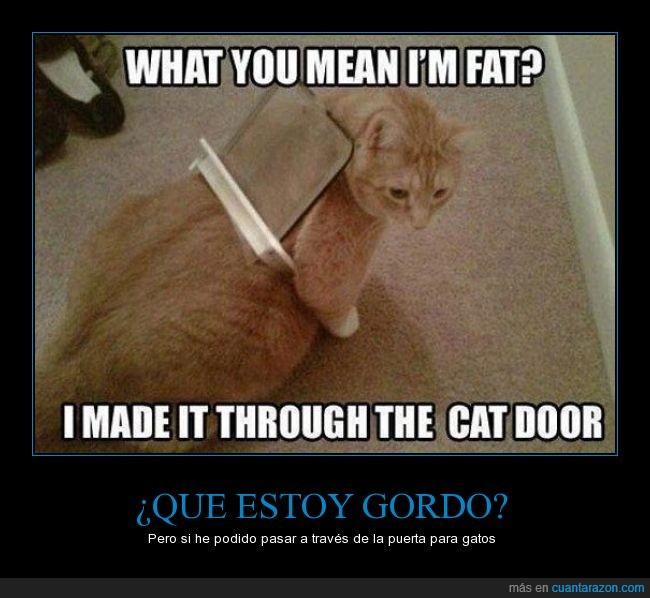 fail,gato,gordo,puerta