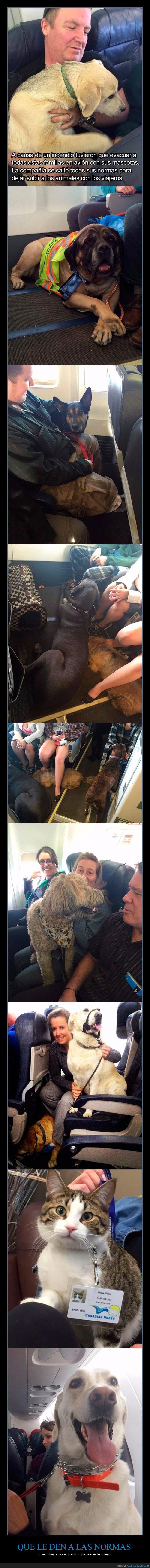 avion,familia,incendio,mascota,montar,perro,salvar