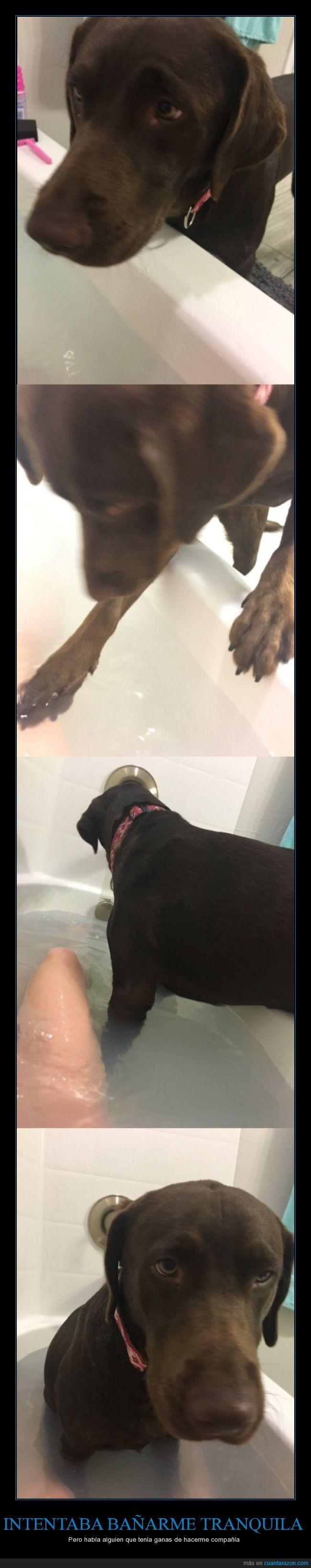 agua,bañar,bañera,compañía,mascota,meter,perra,perro