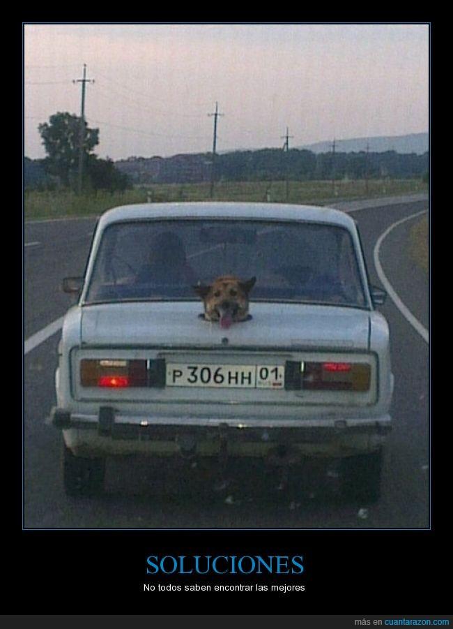 agujero,coche,detrás,fail,maletero,perro,pobrecillo,solución