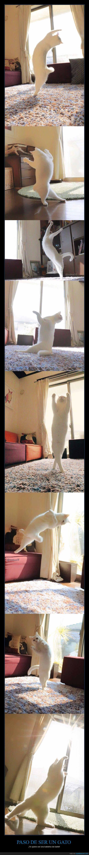 bailar,bailarina,ballet,gato,paso