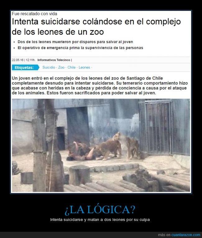 locura loco retrasado suicidio leones muertos