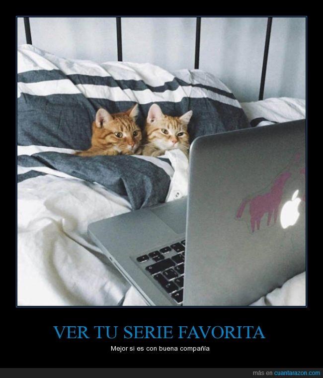 cama,gato,max,mirar,ordenador,pantalla,portatil,serie