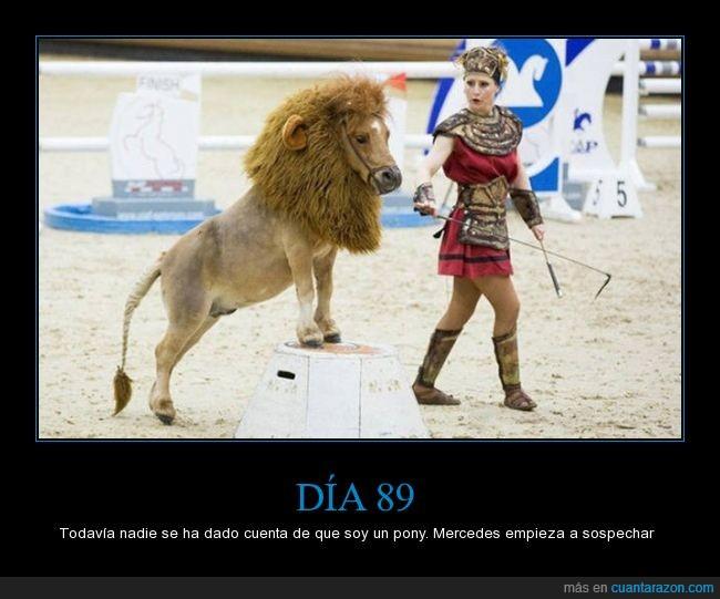 caballo,disfraz,leon,pelo,pony