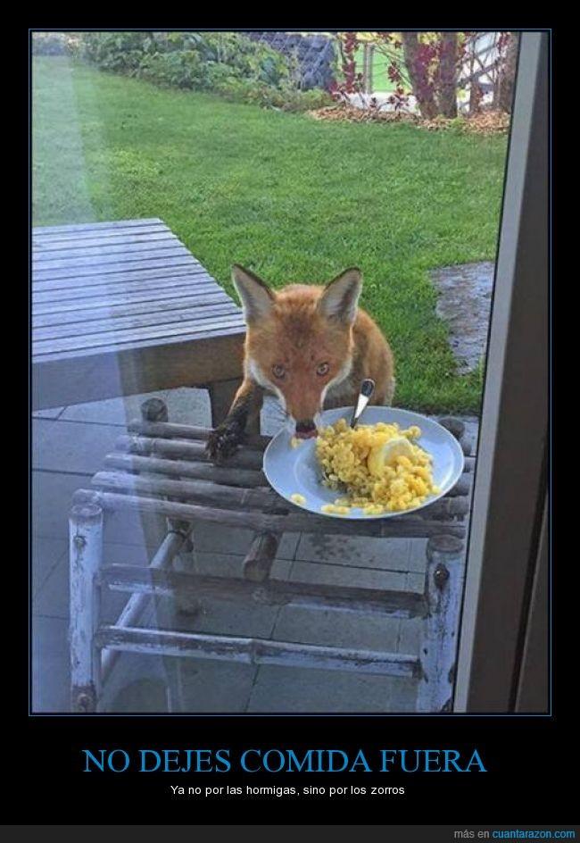 comida,hormigas,jardin,macarrones,plato,queso,robar,zorro