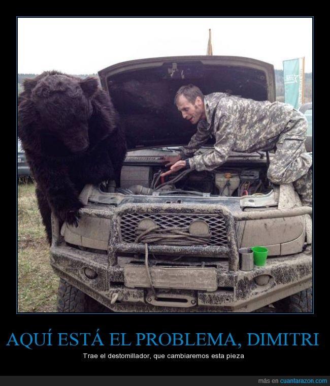 camuflaje,chico,coche,Dimitri,motor,oso,ruso,soldado