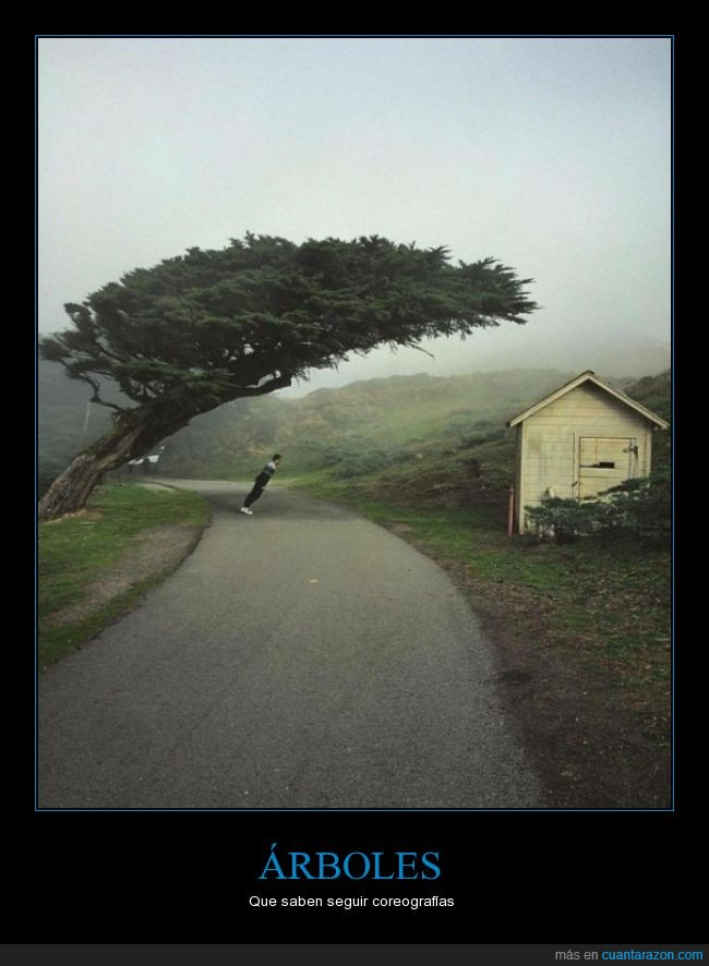 árbol,carretera,casa,inclinado