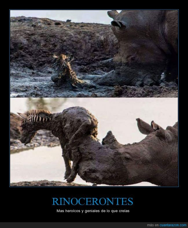 barro,cebra,heroes,Rinoceronte,salvar,zebra