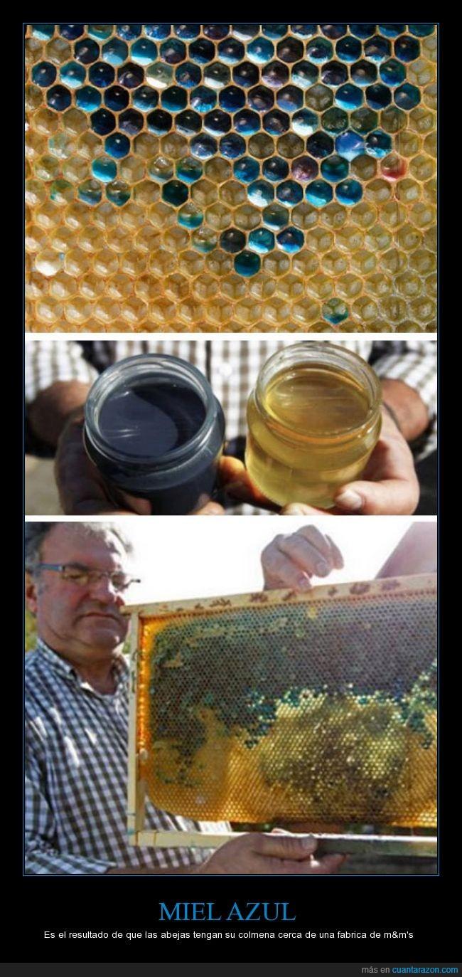 abejas,azul,colmena,m&ms,Miel