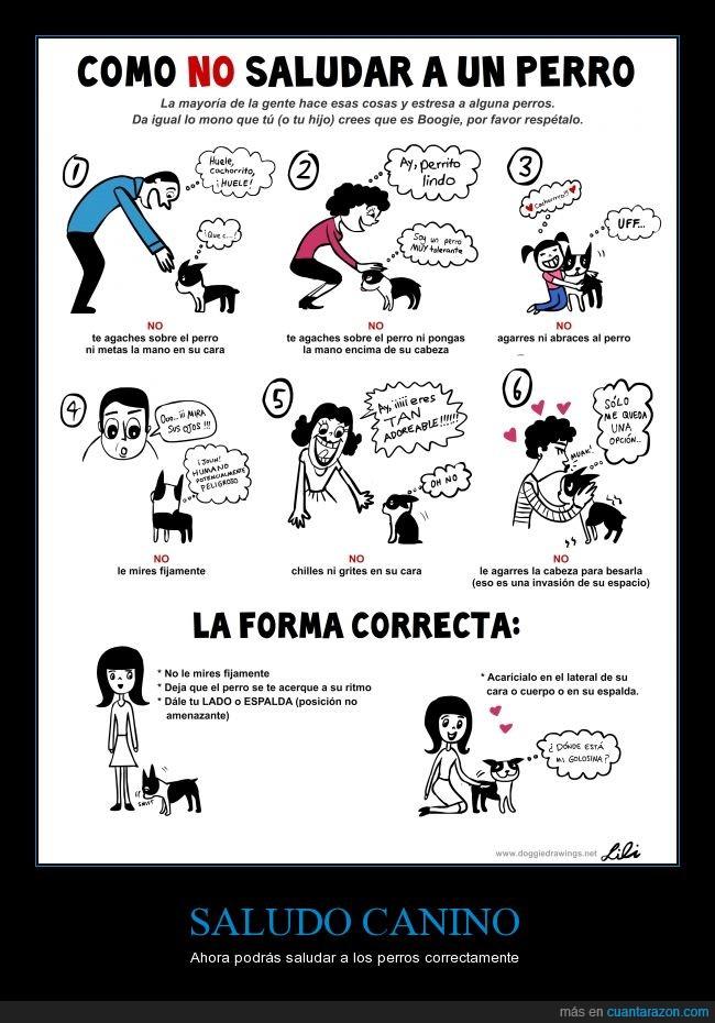canino,forma,perros,saludar