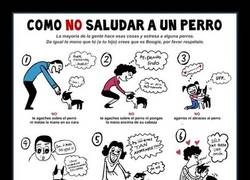 Enlace a Cómo debes y cómo NO debes saludar a un perro