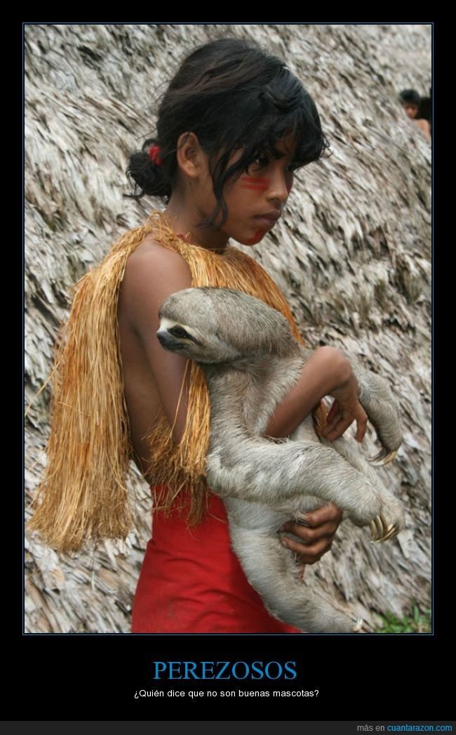 amazonas,Mascota,niña,perezoso