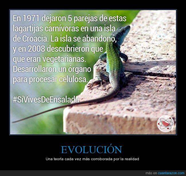 darwin,espero que nadie piense que esto reivindica el veganismo o alguna tonteria por el estilo,evolucion,lagartija,proyecto sandia,si vives de ensalada,una teoria no es una ley que no fue verificada asi que no digais esa tonteria,vegetariana,yo creo que deberia decir herbivora en vez de vegetariana