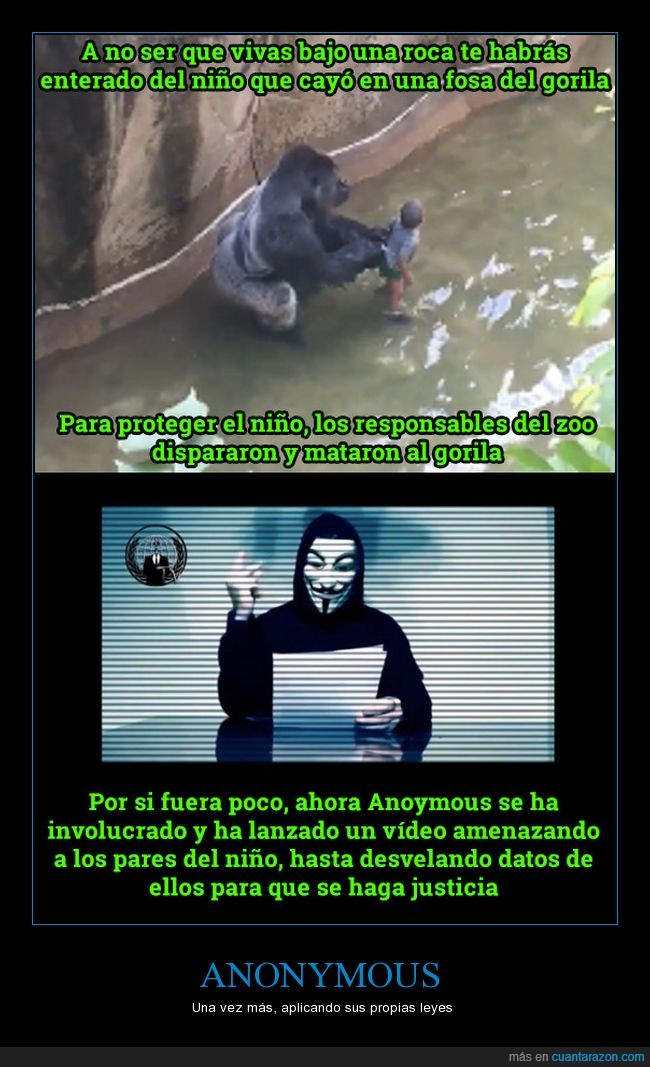 anonymous,gorila,niño,zoo