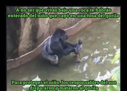 Enlace a Anonymous declara la guerra a los padres del niño que cayó a la fosa del gorila
