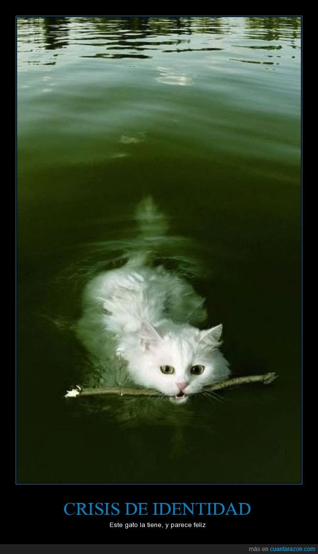 crisis,fail,gato,identidad,perro