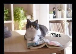 Enlace a Todo lo que el gato toca, pasa a ser suyo