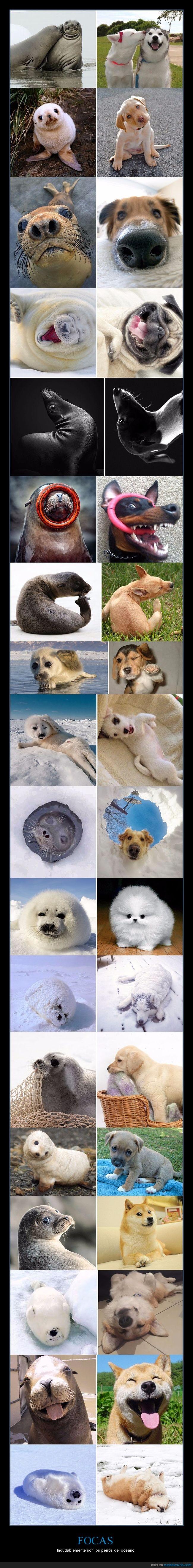 focas,mascotas,perros,polo norte