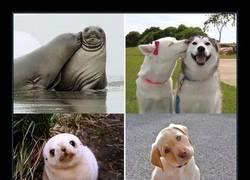 Enlace a 18 fotos que demuestran que las focas son los perros del oceano