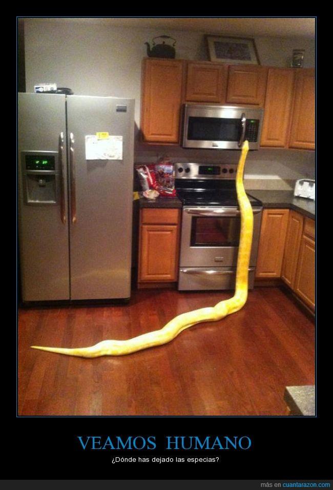 anaconda,cocina,enorme,especias,microondas,terror