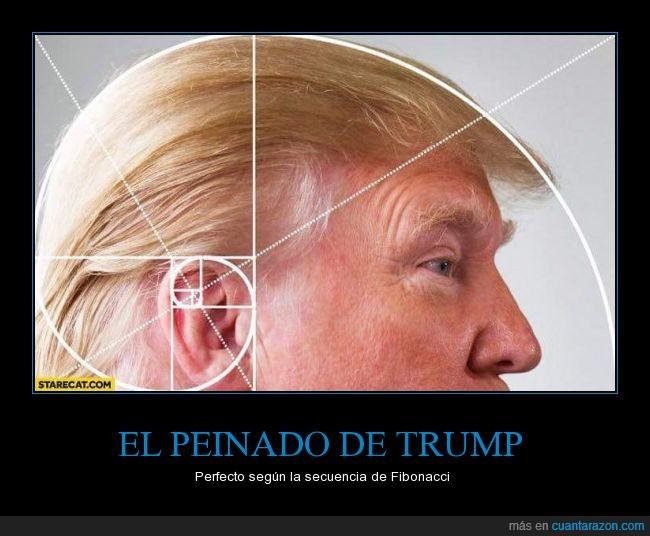 Cuánto tiempo durará peinándose?,Fibonacci,Mr Peluquín,Ojalá su cerebro fuera al menos casi tan organizado como su pelo