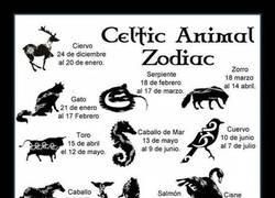 Enlace a ¿Conocías tu horóscopo celta?