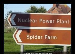 Enlace a Te vas a encontrar unas arañas grandes como tu cabeza