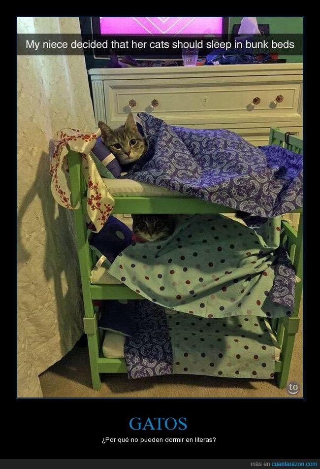 camas,dormir,gatos,literas,quietos