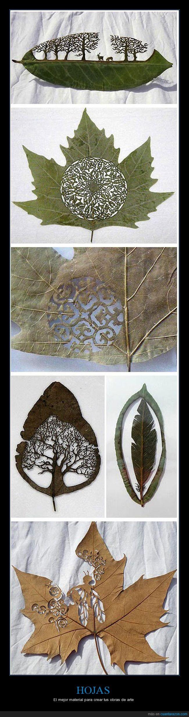 arte,hojas,material,obras