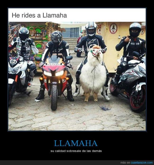 humor,llama,motos,Yamaha