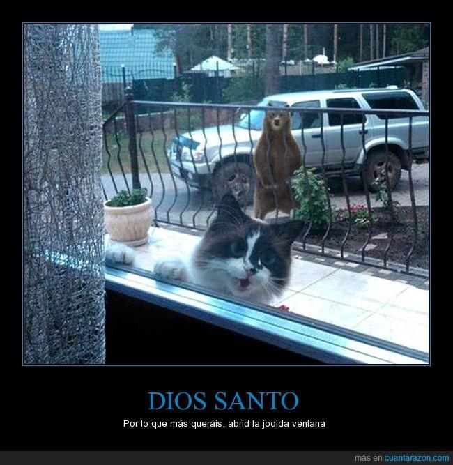 gato,oso,peligro,pidiendo ayuda,ventana