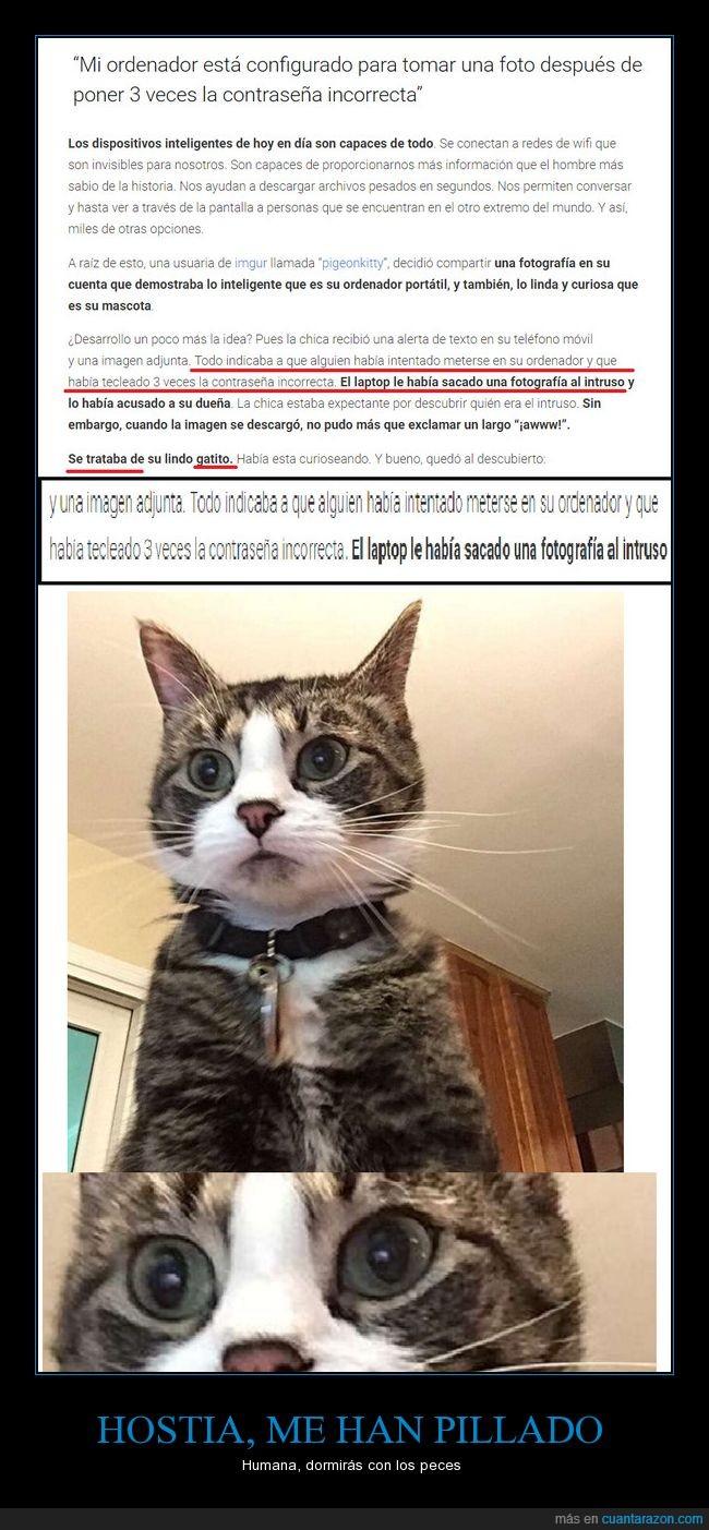 anonimus,awww,cat,cazaratas,gato,hacker,meow,mi primer cartel :'),miau,otro cartel de gatos
