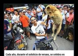 Enlace a Arriesga su vida para salvar perros que van a ser asesinados en el festival de la carne de China