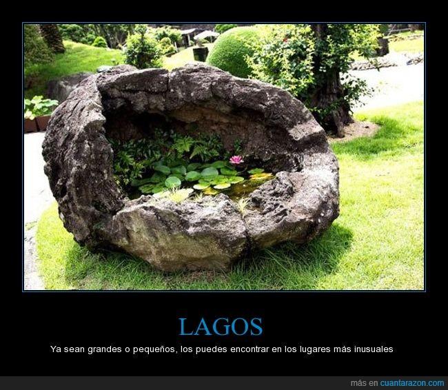 lagos,nigeria,pequeño,piedra,plantas